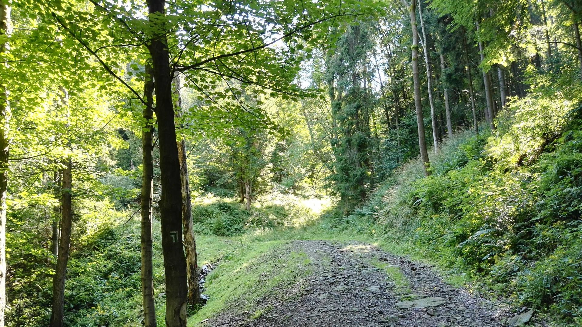 Ekologia - dzieci - szkoła -- spacer w lesie po szlaku