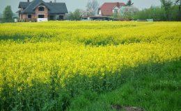 Odnawialne źródła energii dla rolników (2)