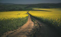 Wydajność produkcji biodiesla