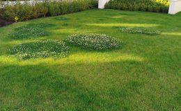 Trawnik, czyli walka człowieka z przyrodą